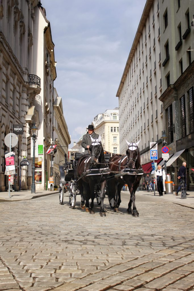 Horse Ride in Vienna