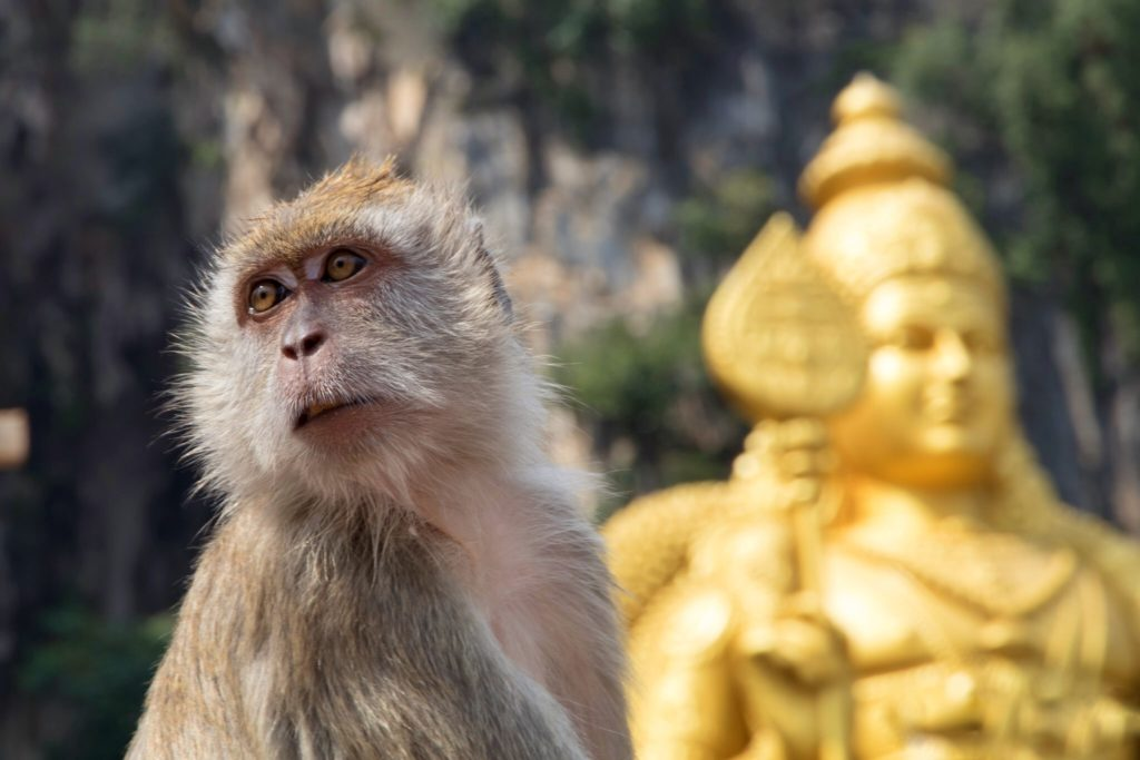 monkey in Batu caves